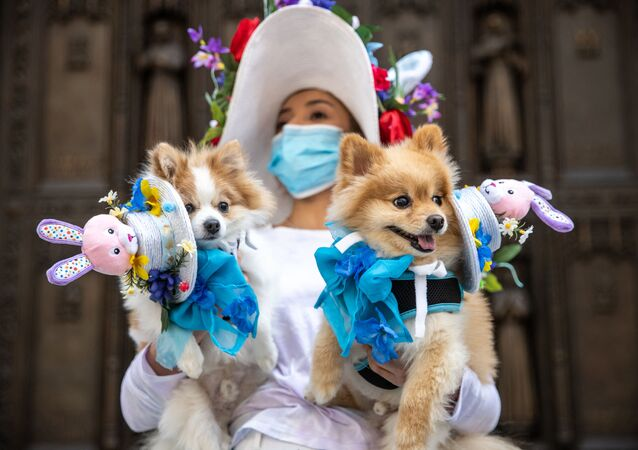 A woman carries dogs in costume during the Easter Bonnet parade on Fifth Avenue in midtown on April 4, 2021 in New York City. The annual Easter Parade and Bonnet Festival on Fifth Avenue was going virtual for the second year, while COVID-19 safety protocols were in place for Sunday's Mass at Saint Patrick's Cathedral.