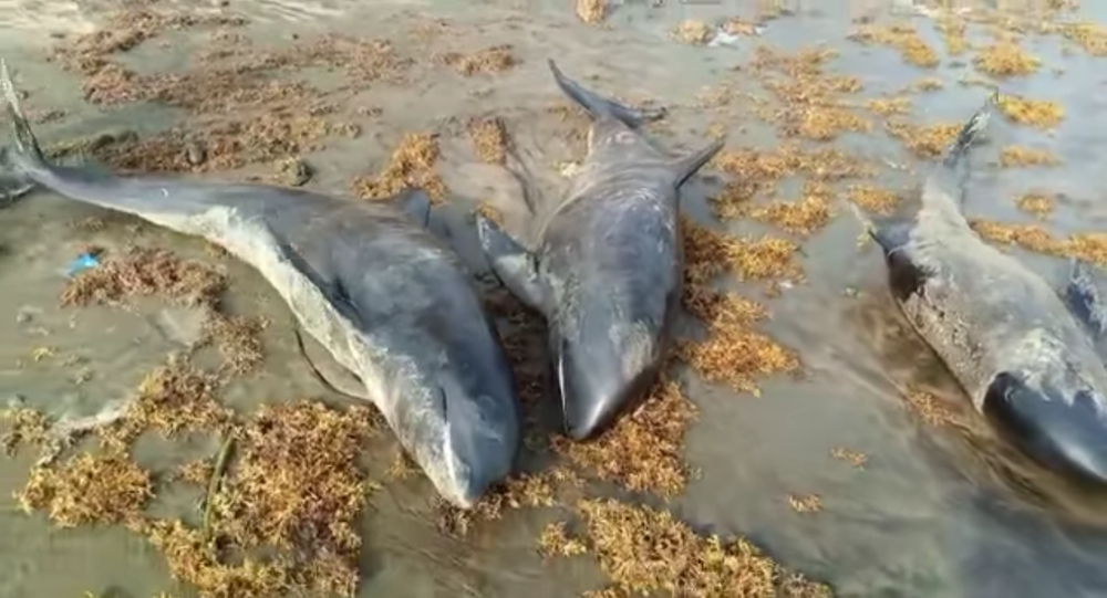 Over 60 dolphins, large fish wash ashore dead in Axim, Osu and Keta in 2 days