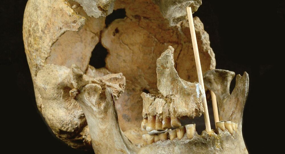 This handout picture released on April 7, 2021, by the National Museum of Prague shows the skull of a modern human female individual from Zlaty kun