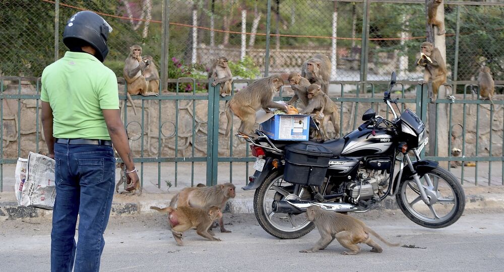 A man feeds monkeys during a government-imposed nationwide lockdown as a preventive measure against the COVID-19 coronavirus in New Delhi on April 10, 2020