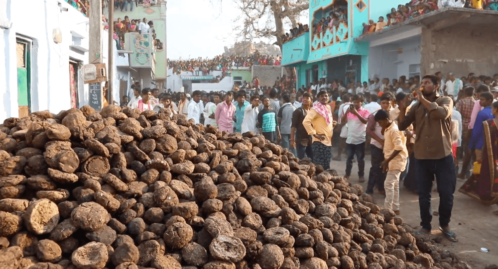 Cow poop flies as Indian villagers throw dung at each other…
