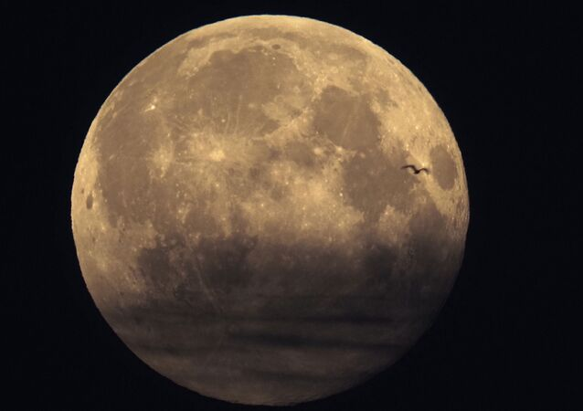 A bird is silhouetted against the full moon in St. Petersburg, Russia, Monday, March 29, 2021.