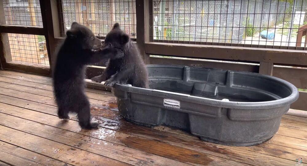 Cute Cubs Play at the Tub || ViralHog