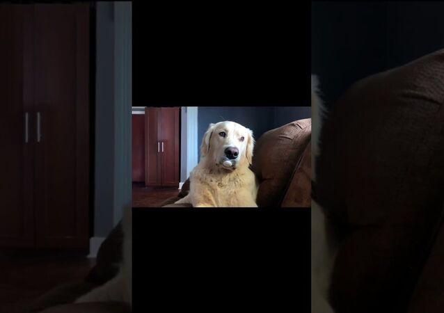 Sweet Pup Suckles on Binky || ViralHog