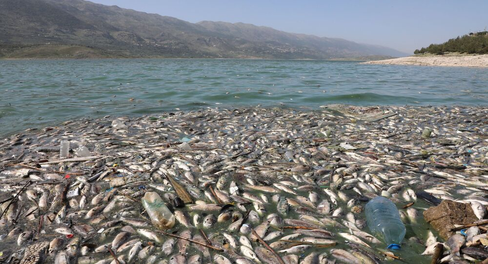 Dead fish are seen floating in Lake Qaraoun on the Litani River, Lebanon April 29, 2021.