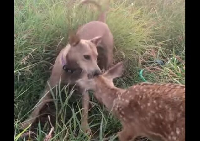 Puppy and deer