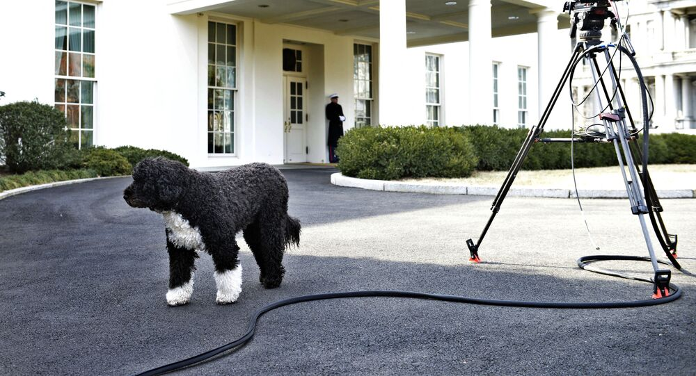 Bo, US President Barack Obama's dog, is seen outside the West Wing of the White House February 11, 2014 in Washington, DC.