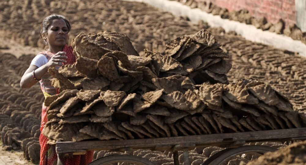 An Indian woman loads in a cart cow dung cakes, for use as cooking fuel in Allahabad, India, Wednesday, Jan.28, 2009