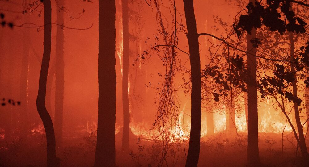In this photo provided by New Jersey Department of Environmental Protection, a forest fire burns in Little Egg Harbor Township, N.J., on Sunday, May 16, 2021. (New Jersey Department of Environmental Protection via AP)