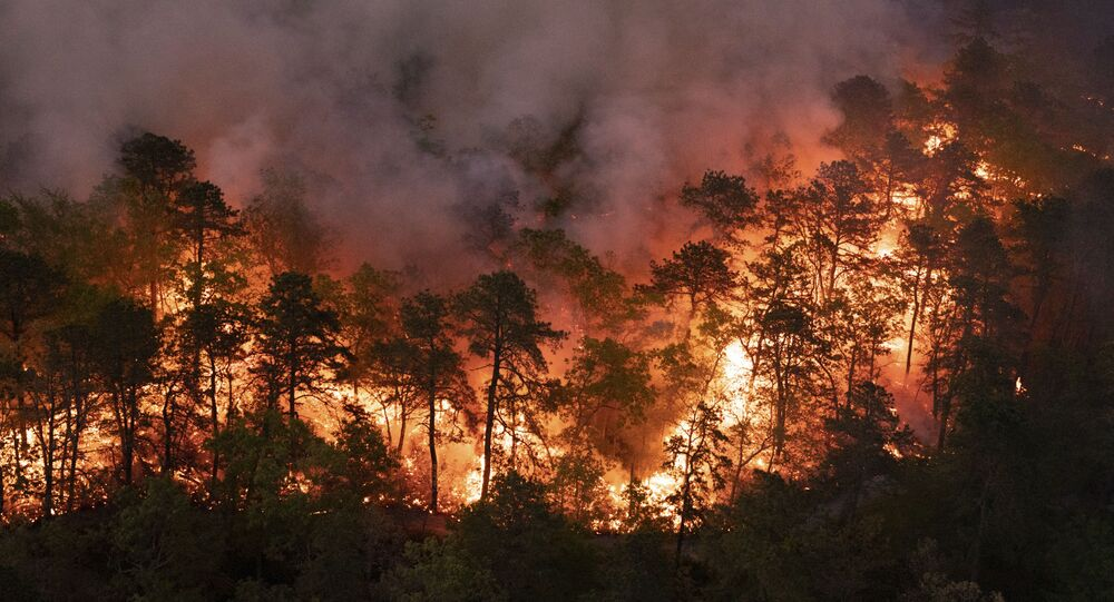 In this photo provided by New Jersey Department of Environmental Protection, a forest fire burns in Little Egg Harbor Township, N.J., on Sunday, May 16, 2021. ( New Jersey Department of Environmental Protection via AP)