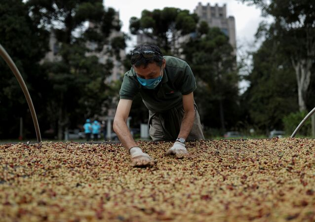 A man spreads coffee grains for drying at the Biological Institute plantation in Sao Paulo, Brazil May 8, 2021
