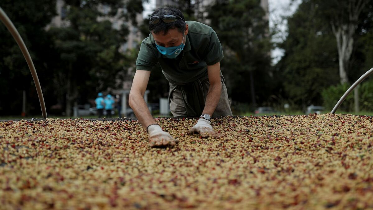 Coffee prices near 7-year high after Brazilian frosts