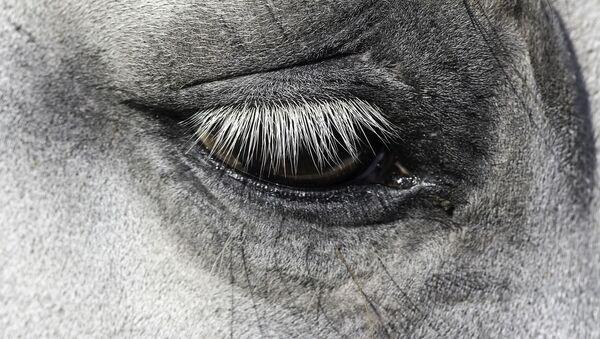 Horse eye - Sputnik International