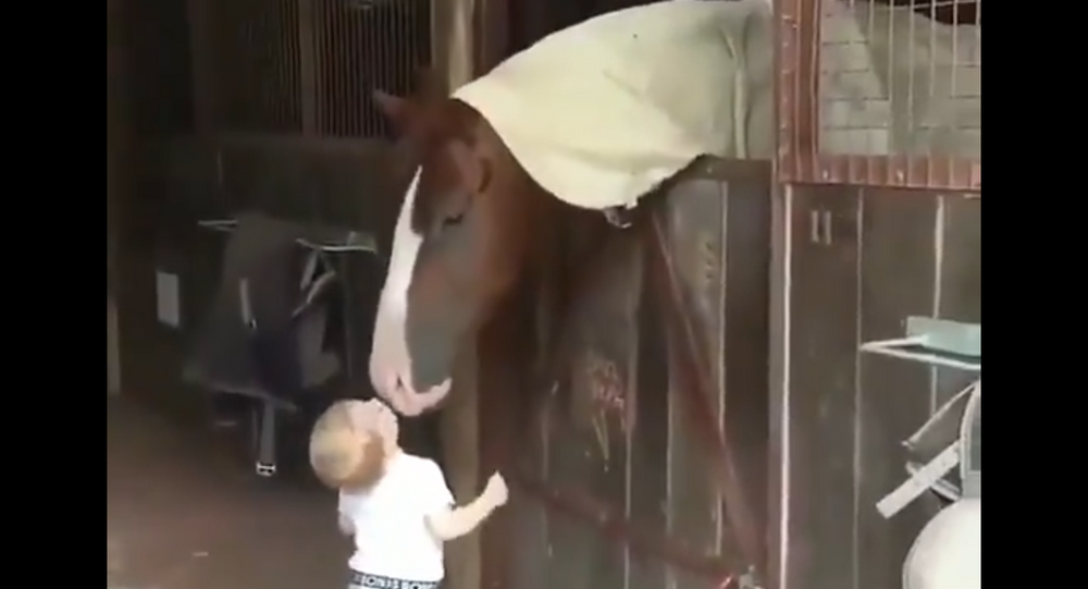 Toddler Greets Horses With Kisses In a Stable