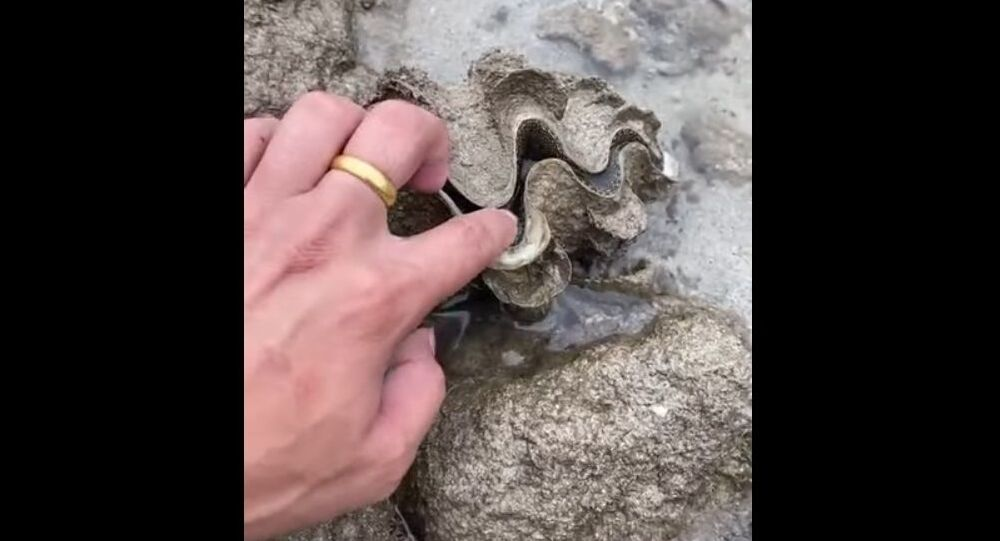 Shell Gives Curious Person a Surprise    ViralHog