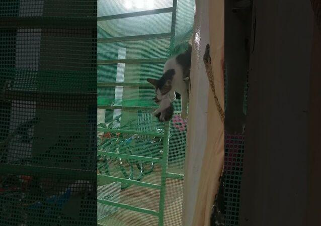 Cat Climbs Through Gate With Her Kittens    ViralHog