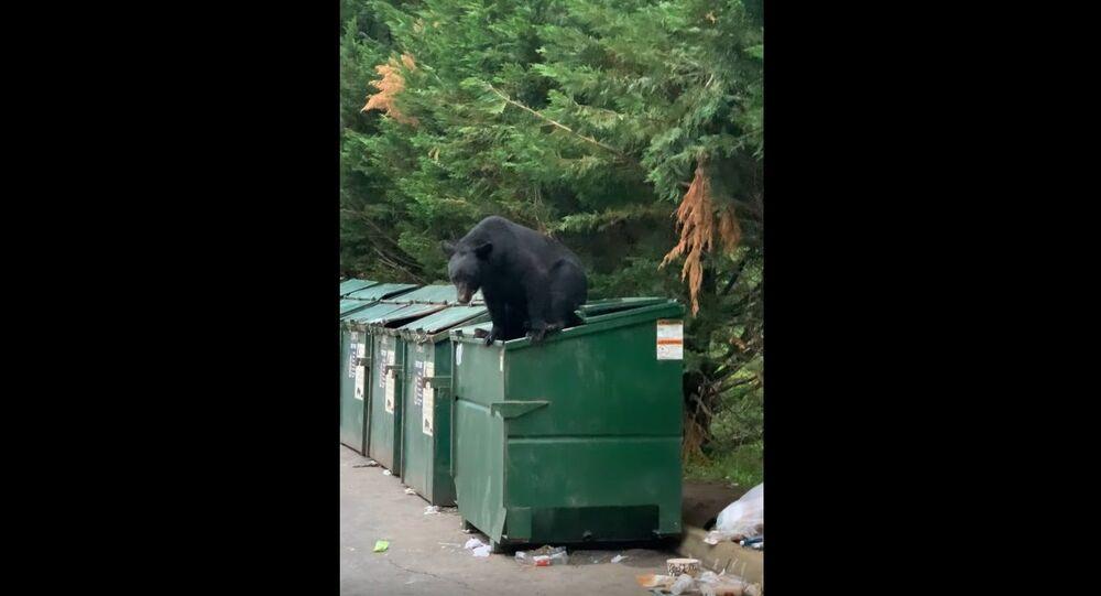 Bear Caught Climbing Out of Dumpster    ViralHog