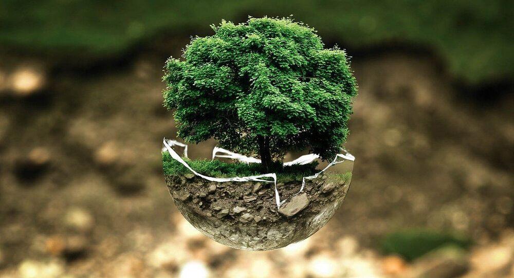 Delhi Gov't to Launch Massive Plantation Drive to Curb Perennial Air Pollution Challenge