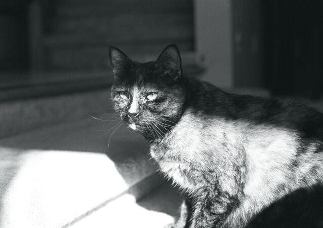 Devious Cat Face