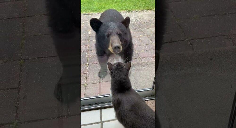 Young Bear Meets Bella the Cat    ViralHog