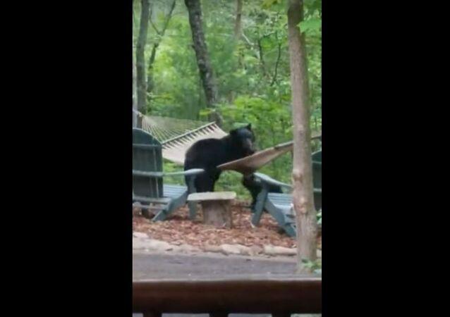 Bear Family Has Fun in Hammock || ViralHog
