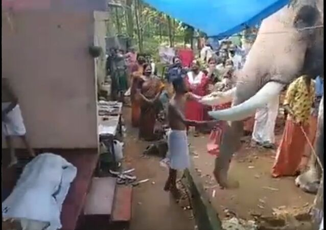 Elephant pays last respect to his mahout.