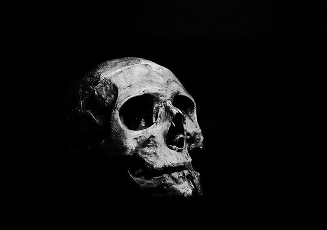 Skull on grayscale