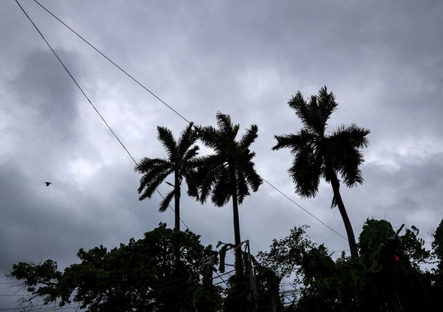 A bird flies past coconut trees under the inclement weather due to Cyclone Yaas in Kolkata, India,