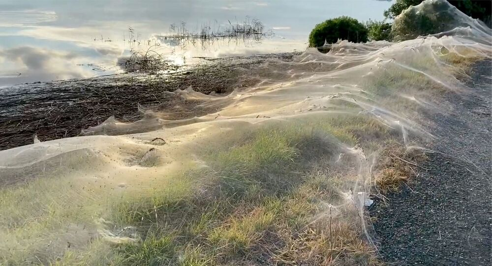 A still image from a social media video shows spiders' gossamer near wetlands in Gippsland, Victoria, Australia June 14, 2021