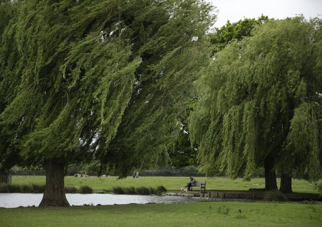 A man sits on a bench with a dog as a gust of wind blows Weeping Willow trees either side of him on a windy day in Bushy Park, south west London, Friday, May 21, 2021