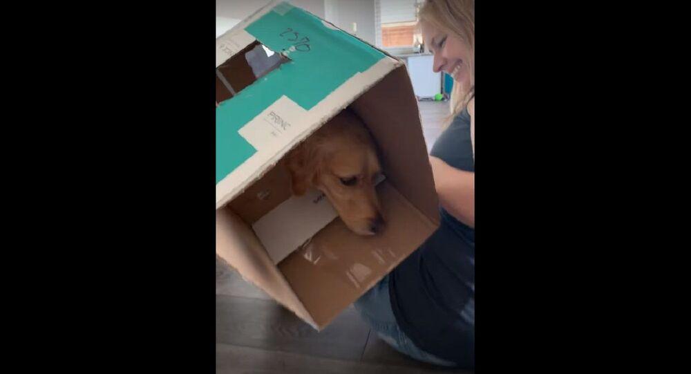 Clever Dog Wins the Hotdog Game at a Cost    ViralHog