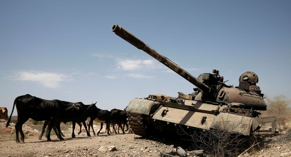 Cows walk past a tank damaged in fighting between Ethiopian government and Tigray forces.