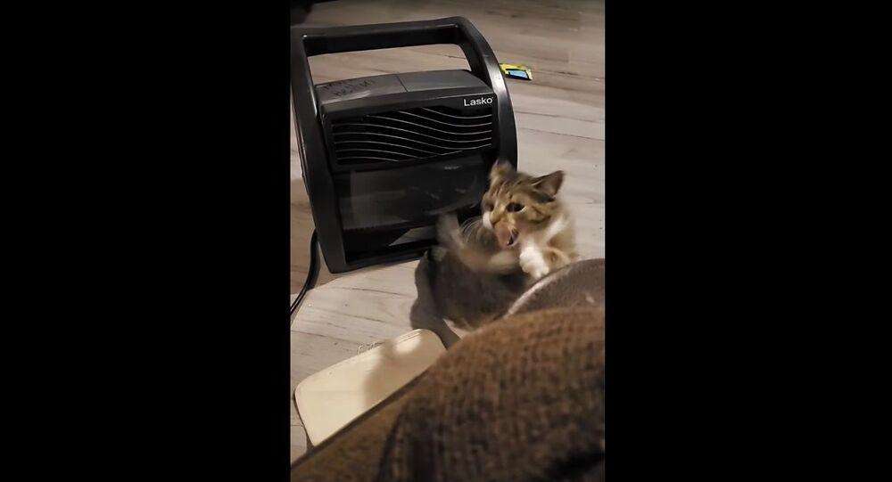 Cat Battles Cold Airflow || ViralHog