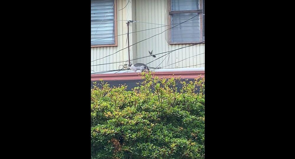 Bird Pecks at Cat's Back    ViralHog