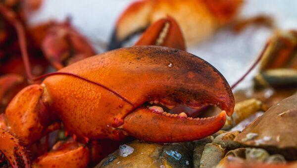 Red lobster, white textile - Sputnik International