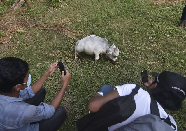People take pictures of a dwarf cow named Rani, whose owners applied to the Guinness Book of Records claiming it to be the smallest cow in the world, at a cattle farm in Charigram, about 25 km from Savar on July 6, 2021.