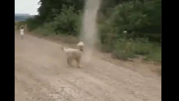 Dog chases dust devil - Sputnik International