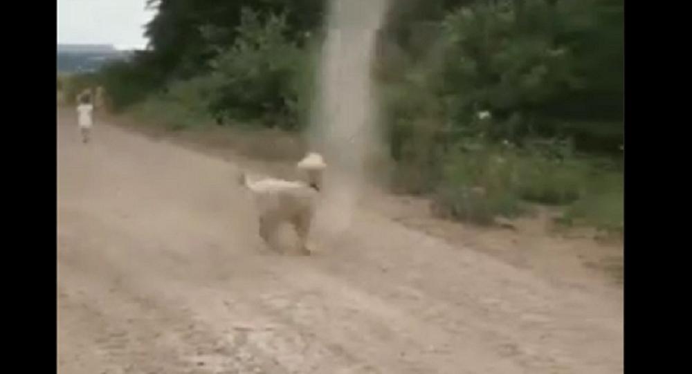 Dog chases dust devil