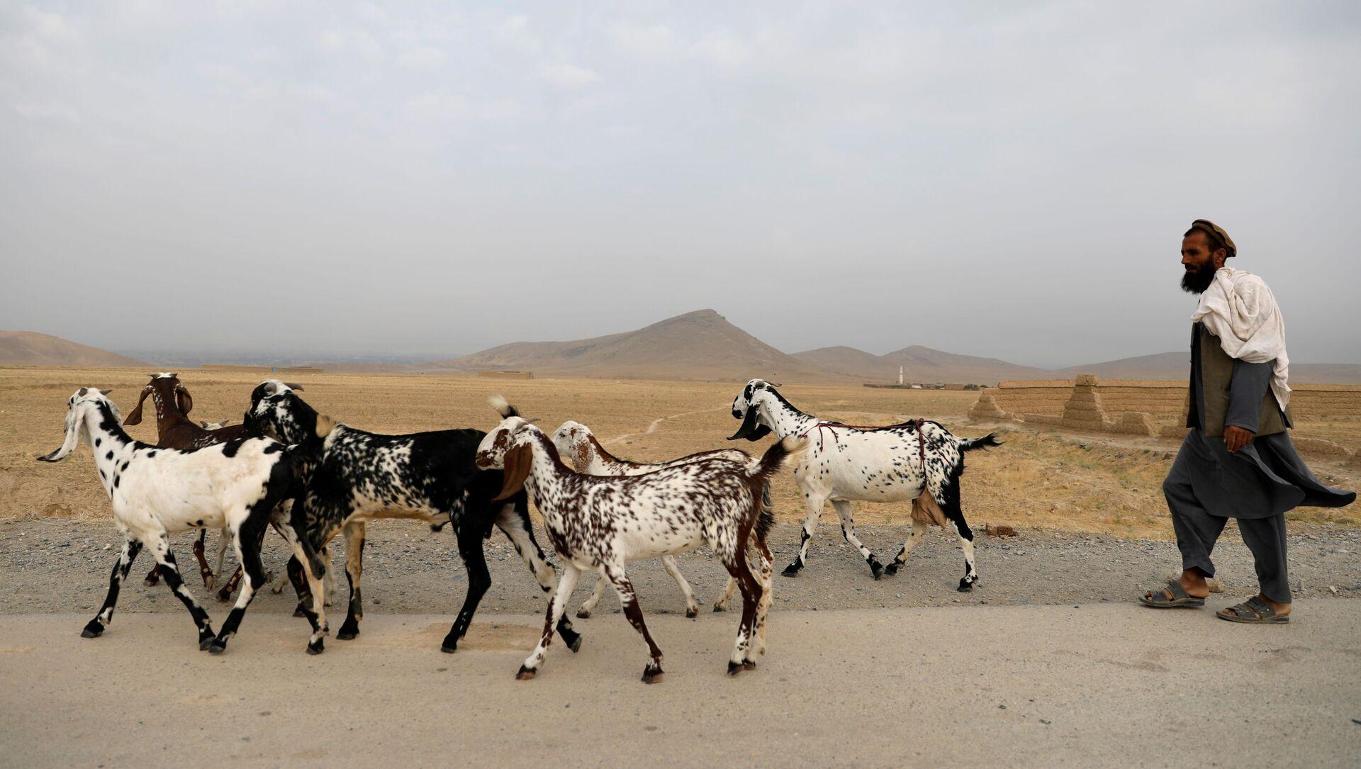An Afghan man walks with his goats on the outskirts of Kabul, Afghanistan July 13, 2021. - Sputnik International, 1920, 27.07.2021
