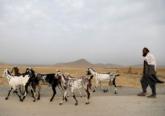 An Afghan man walks with his goats on the outskirts of Kabul, Afghanistan July 13, 2021.