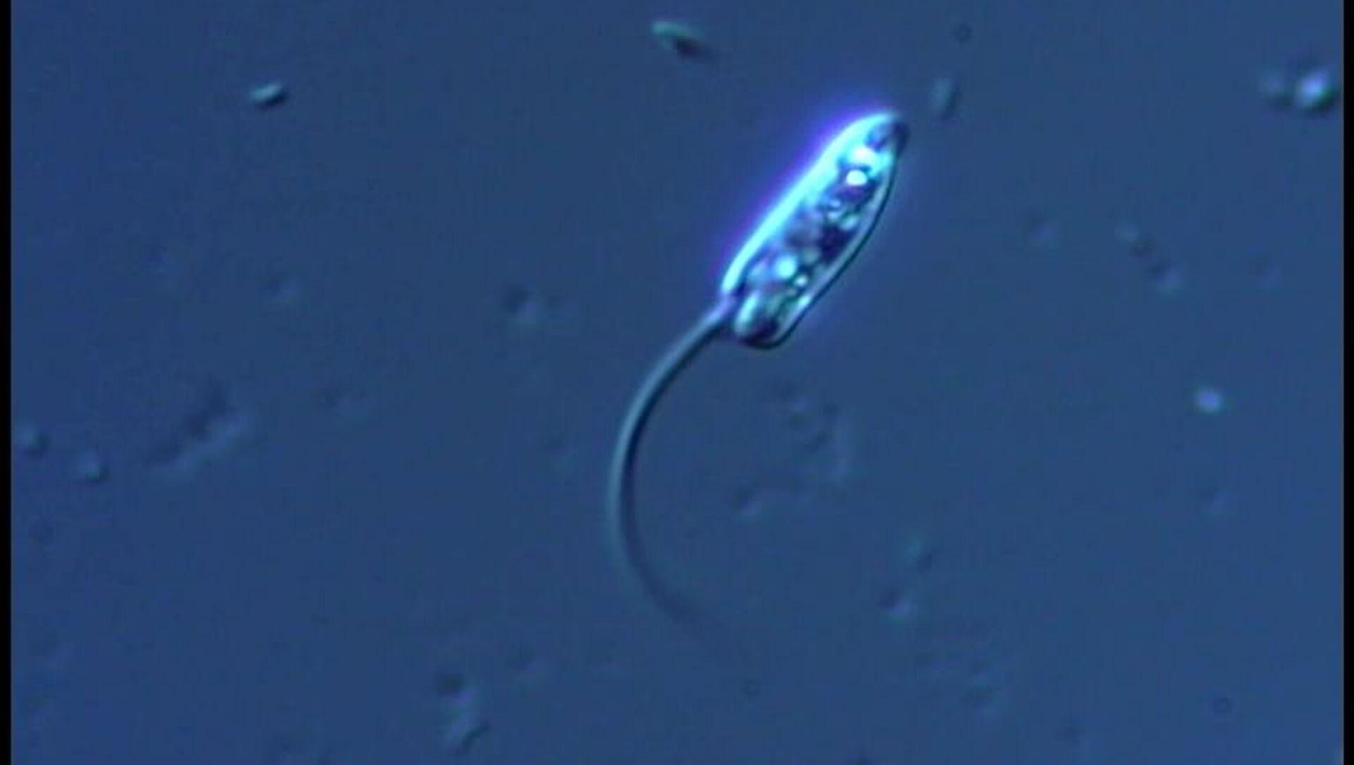 Microbial species - Sputnik International, 1920, 03.08.2021