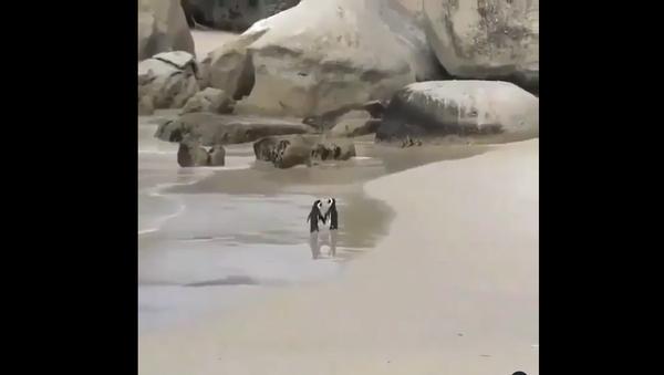 Penguins on the beach - Sputnik International