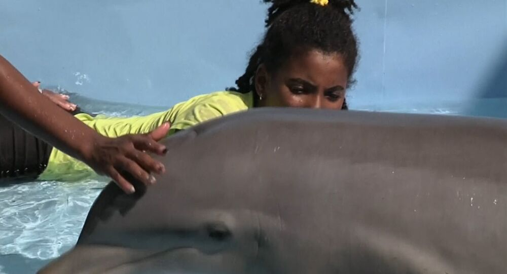 Therapy in an Aquarium: Dolphins Teach Kids With Special Needs How to Communica