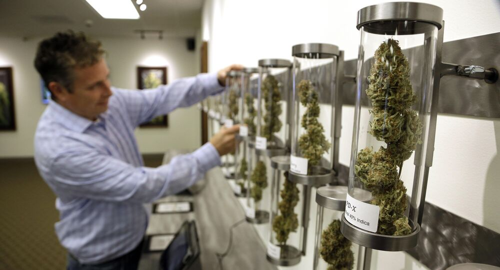 In this Nov. 5, 2014, file photo, Shane McKee, co-founder of Shango Premium Cannabis medical marijuana dispensary, pulls a sample from their display of cannabis flowers in Portland, Ore. Oregon voters have spoken on marijuana legalization and now legislators want their say. Though the legislative session is more than two weeks away, lawmakers have already introduced more than a dozen bills related to pot.