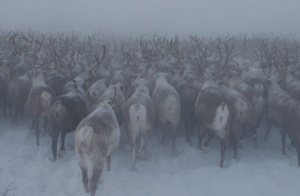 Nenets Autonomous Okrug