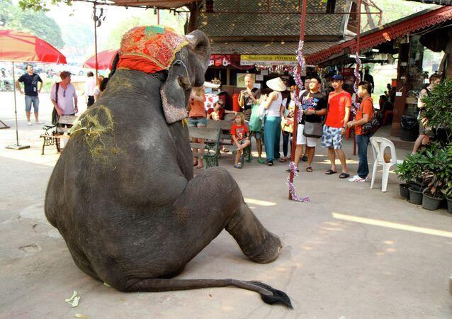 Elepant on tourist duty