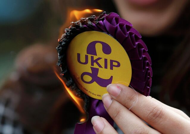 United Kingdom Independence Party (UKIP) rosette