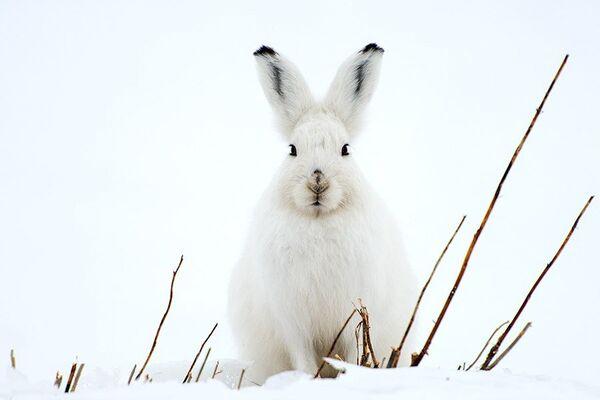 Russian Photographer Ivan Kislov Takes Amazing Pictures of Animals - Sputnik International