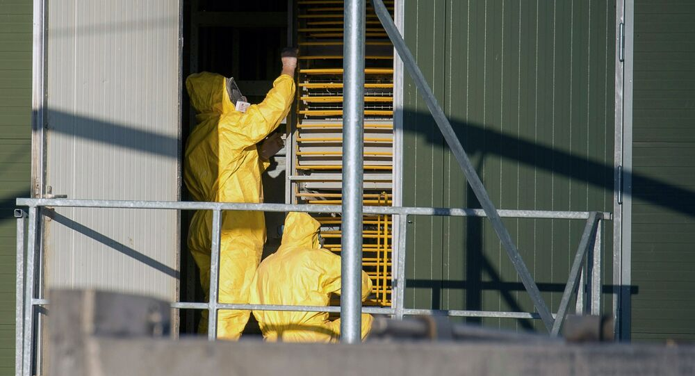 Experts wearing protection suits examine trays used to transport chicks at a poultry farm, where a highly contagious strain of bird flu