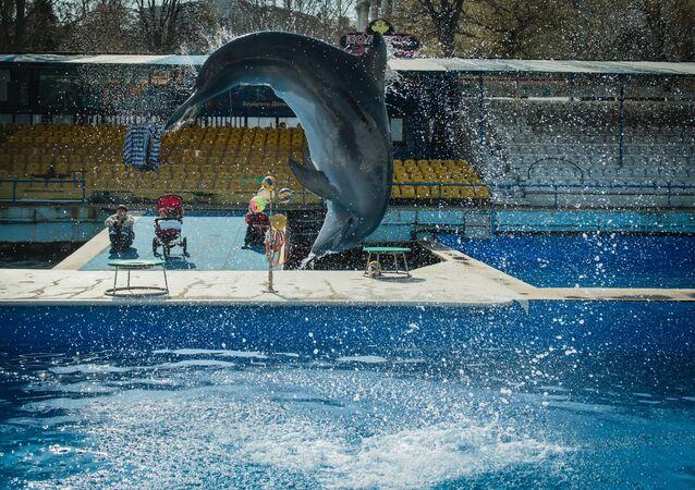 Dolphinarium in Sevastopol